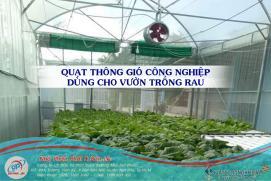Quạt thông gió công nghiệp tròn lắp đặt cho vườn trồng rau